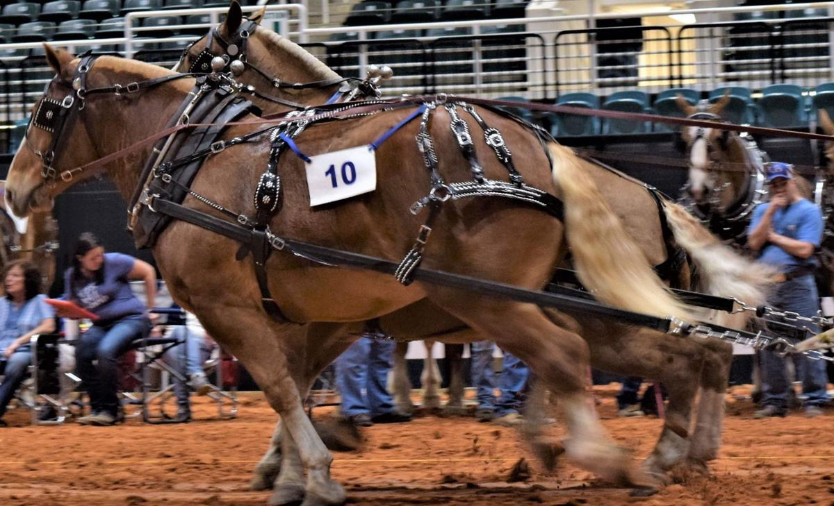 AShorse021419a.jpg