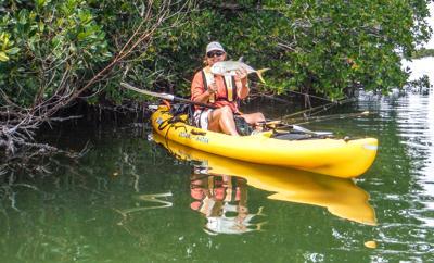 kayak mangroves
