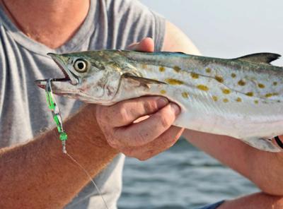 mackerel spoon