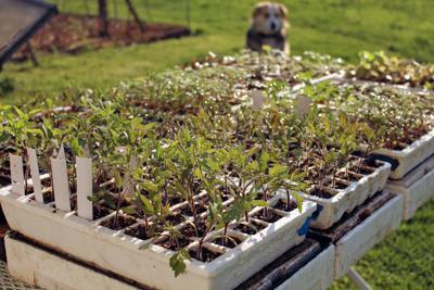 Gardening Hardening Off