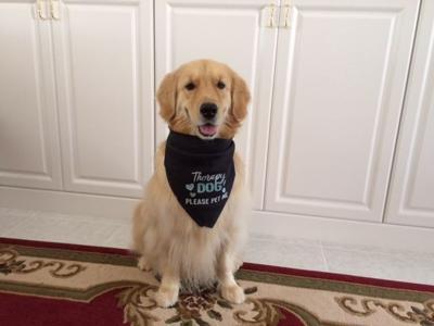 Dog Ownership Aug. 21