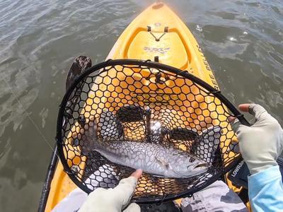 kayak trout