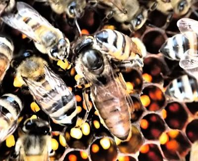 Beekeeping, not just a hobby