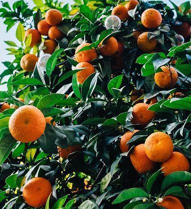 DeSoto awaits Nuco Citrus land deal