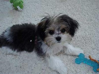 Dog ownership Sept. 4