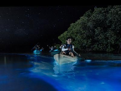 plankton glow
