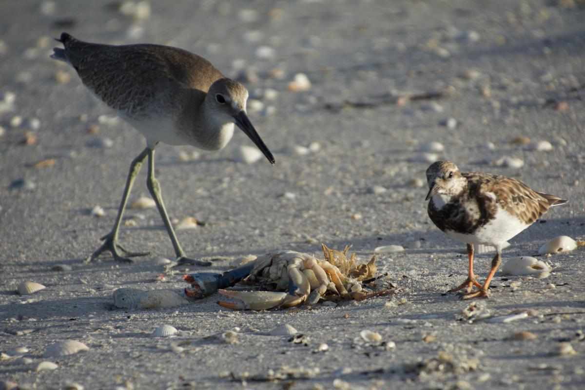 Red Tide Returns To Venice Beaches Red Tide Yoursun