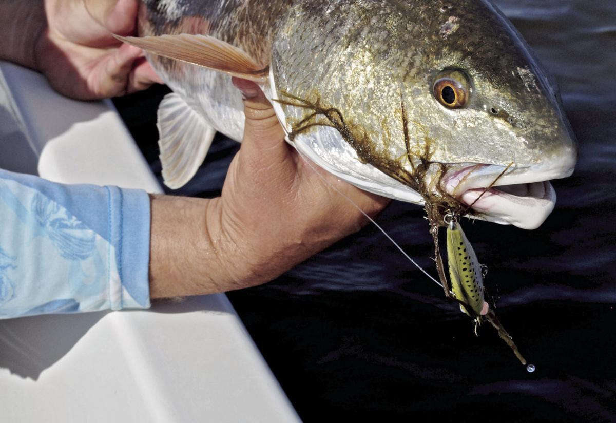 redfish mirrodine