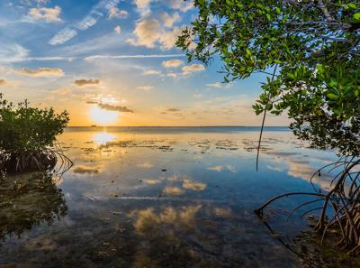 mangrove flats