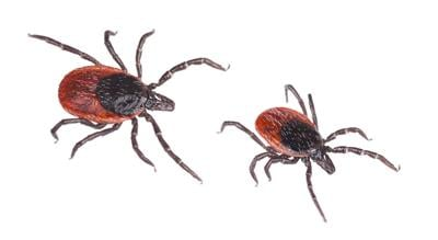 How to reduce risk for Lyme disease