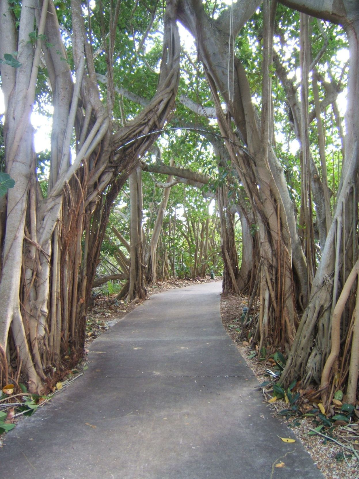 Outdoor spaces at Selby Gardens will be transformed ...