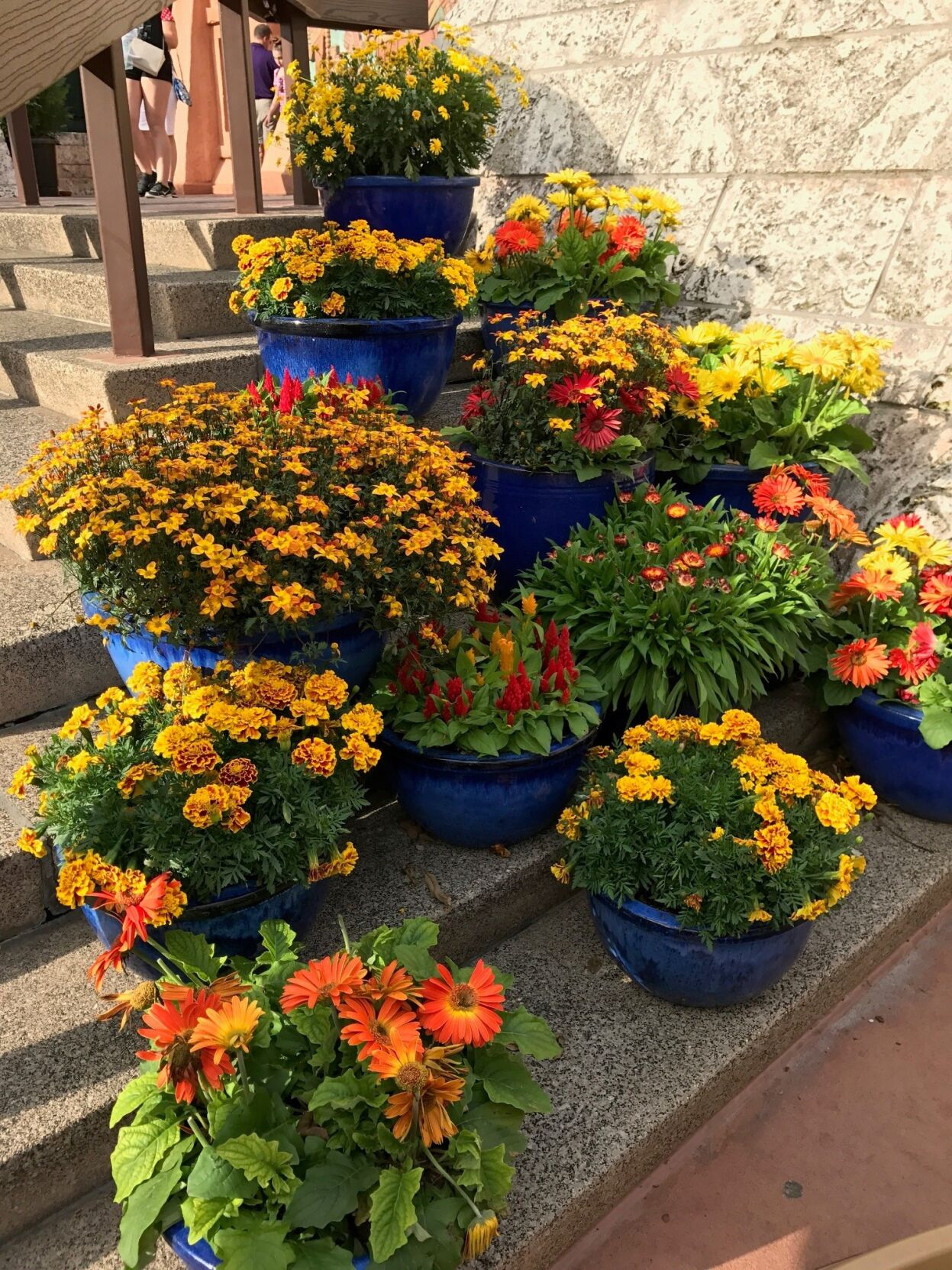 Grouping of colorful pots and assorted plants