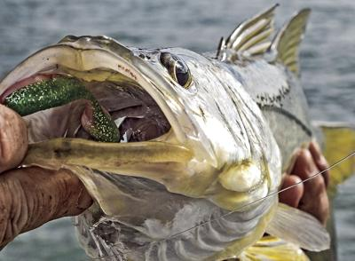 snook lure