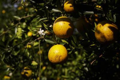 Citrus Highlands County