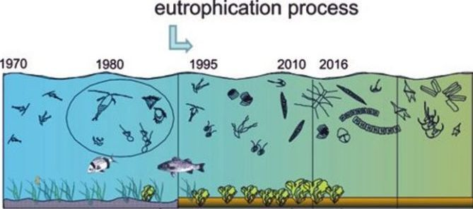 How algae overgrowth will create a dead zone in water