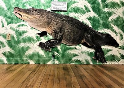 Snook Haven exhibit photo 3