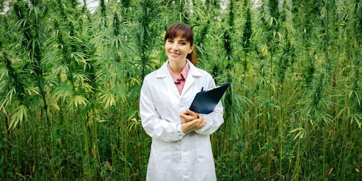 High profile: Medical marijuana use on the rise