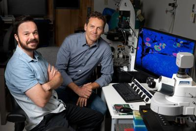 How old are your organs? Salk, UCSD mouse study finds human clues