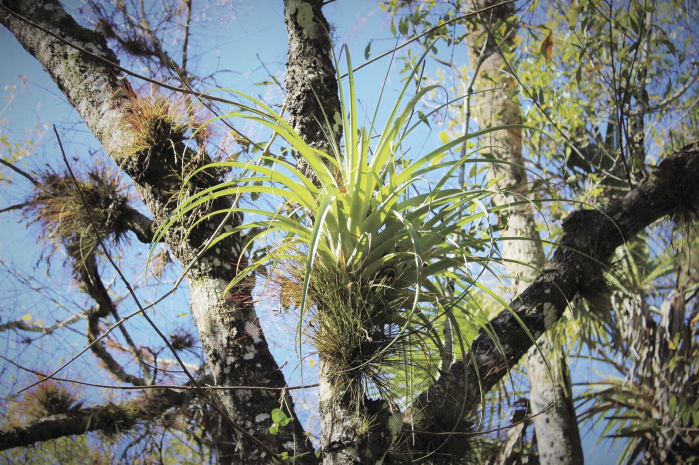 Tree airplant