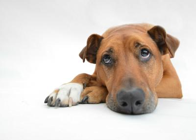 Sad-eyed dog photo