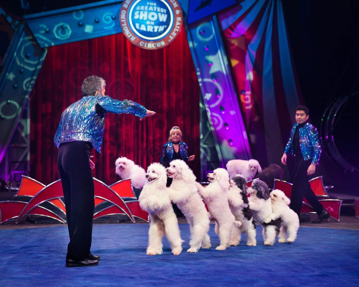 Circus Sarasota will dazzle and delight during winter show