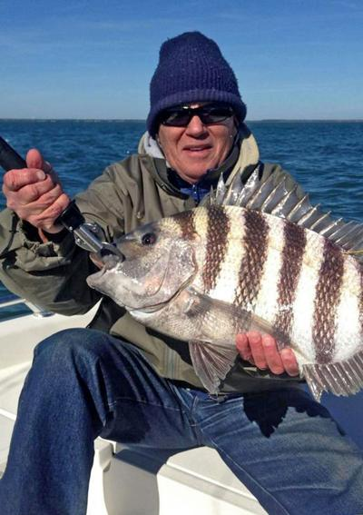 winter sheepshead