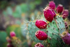 Yuma Main Library to celebrate Mexican Independence Day