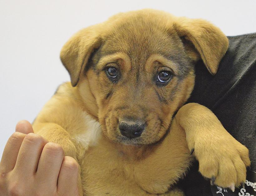 HSOY hopes to become a 'no-kill shelter'