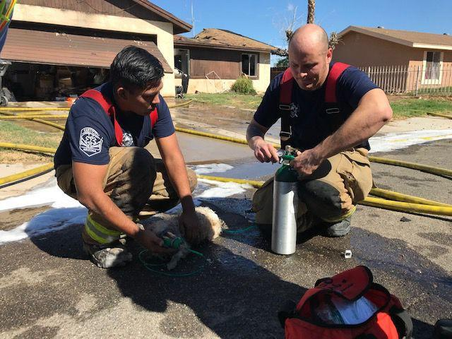 Pets in peril: Yuma firefighters up to the task