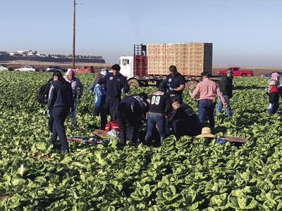 Firefighters treat ag worker while harvesting continued